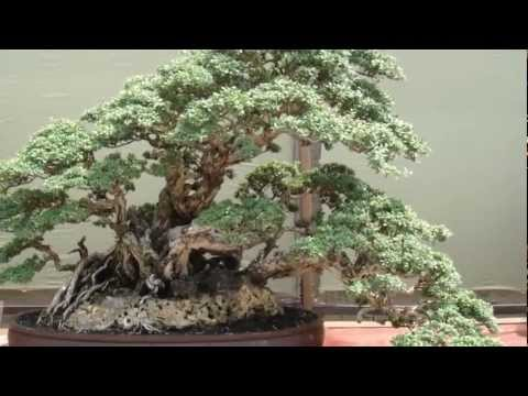 Indonesian bonsai exhibition