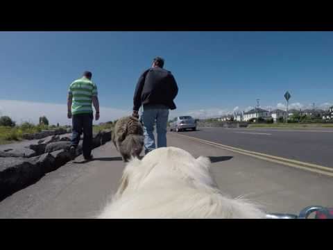 MADRA's Dogathon from a Puppy's Point of VIew