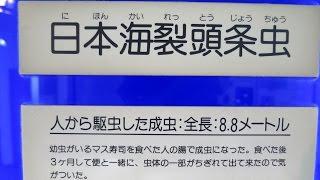 日本 海 裂 頭 条 虫
