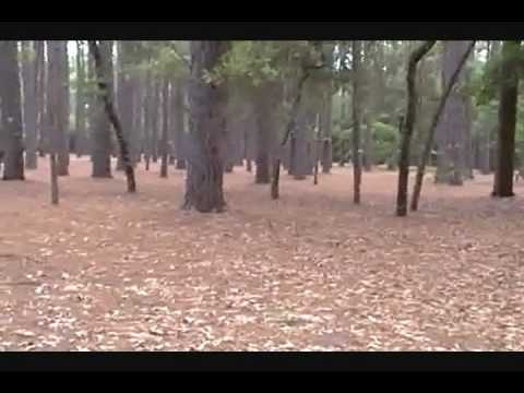 Aiken State Natural Area, South Carolina, RV Campground.wmv