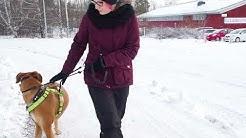 Mikkelin Eläinsuojeluyhdistys ry Lucas-koira
