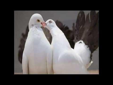 Descargar Video Умоляю, ради Бога тише...