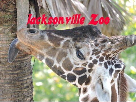 Jacksonville, Fl Zoo