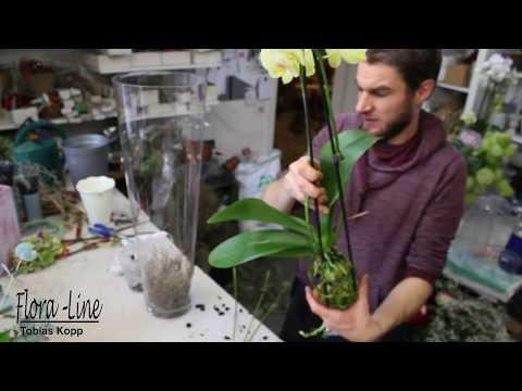 DIY- Blickfang für das Wohnzimmer - Orchidee in Glasvase pflanzen