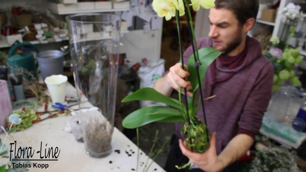 Diy Blickfang Für Das Wohnzimmer Orchidee In Glasvase Pflanzen