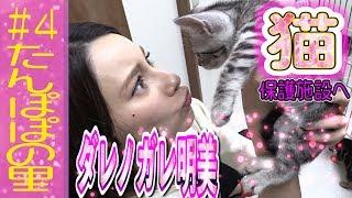 ダレノガレ明美が猫の保護施設に行ってきた! 猫の保護施設 神奈川県相模原市「たんぽぽの里」 #猫 #猫の保護 #ダレノガレ.