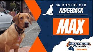 6 Mo. Old Ridgeback (Max) | Incredible Dog Training Virginia | Fredericksburg Dog Trainers