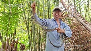 Cận Cảnh Cao Thủ Bẫy Rắn Rượt Bắt Rắn Hổ  Phần 1l Catching Snake By Bare Hands