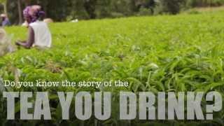 JusTea - Farmer Direct Kenyan Tea