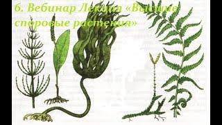 Лекция «Высшие споровые растения»