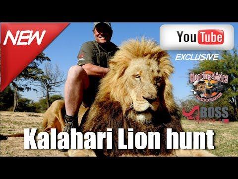 Boss Safaris Kalahari Lion hunt.