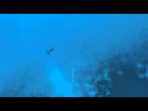 11yr old free dives (45ft) Cayman Islands Sunset House Mermaid