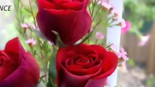 ♥*•.¸♥ Chehra tera,jab jab dekhon Pyar aye tujh pe jaan ♥*•.¸♥