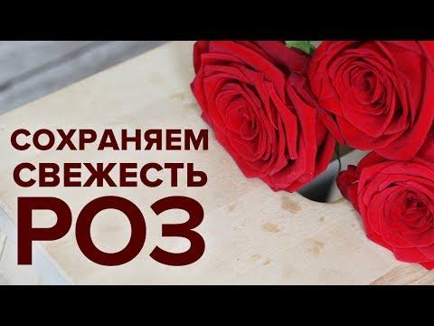 Как сохранить срезанные розы в вазе подольше