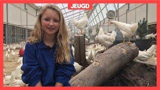 De kippen van Juul (13) zijn beroemd