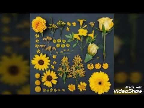 صور و خلفيات جميلة باللون الاصفر Youtube