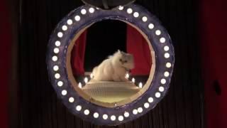Песня кошек года профессиональный видео редактор