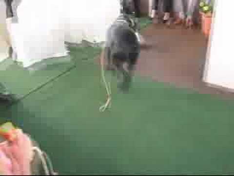 Hund Bringt Ringe Youtube