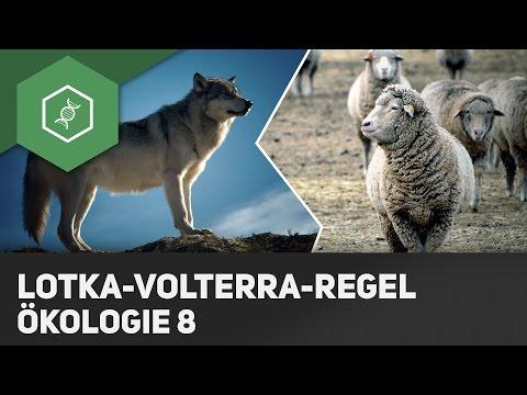 Lotka-Volterra-Regeln - Ökologie 8