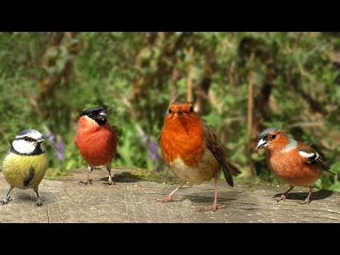 The Birds of Summer : Beautiful Video and Bird Sounds - Film