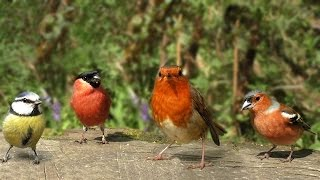 The Birds of Summer : Beautiful Video and Bird Sounds - Filmed in Slow Motion thumbnail
