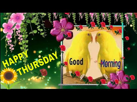 Morning Song Video, Lovely Sayri Song Video, Whatsup Stetus...wishes....video, Whatsup Message.