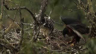 Nido de Águila Poma en Argentina