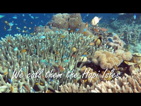 Easy diving on colourful reef in the 'Hapi' Solomon Islands