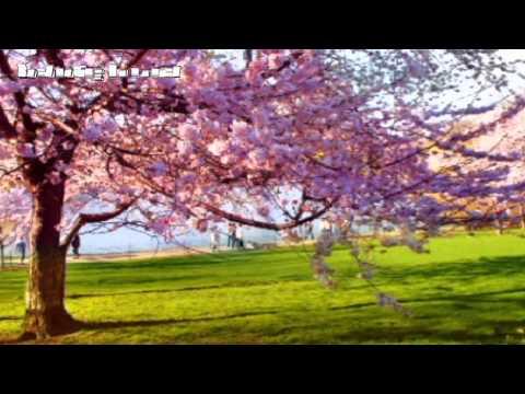 Yiruma - Spring Time