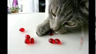 витамины для кошек во время линьки