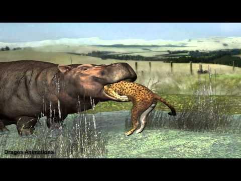 hippo eat leopard
