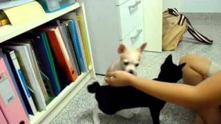 Tutorial - How To Teach Your Dog To Kiss And Pet Your Cat
