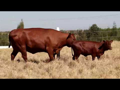 LOTE 02   CHM 0017