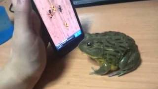 Frog's Like Touch Game's Too
