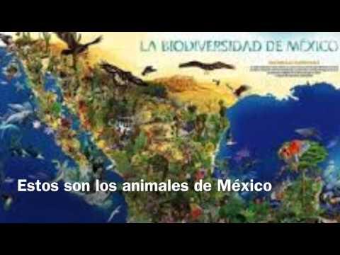 Regiones naturales de m xico youtube - Aromatizantes naturales para la casa ...