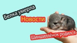 Новости канала Хомки 12 04 18