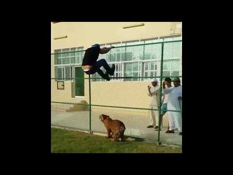 Dubai pets funny compilation