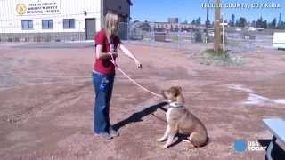 Deaf Dog Taught Sign Language For Commands