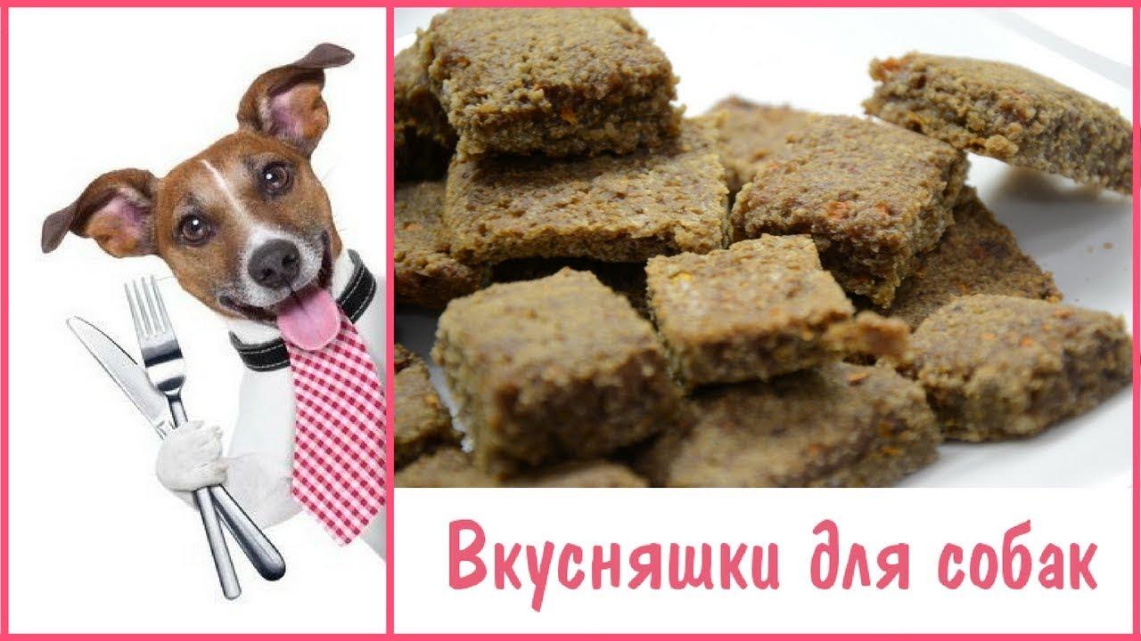 как приготовить собачьи вкусняшки рецепты печенье