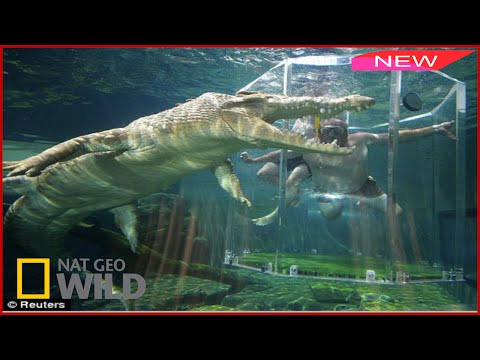 World s Deadliest Animals The Deep BBC Documentary Wildlife Animals