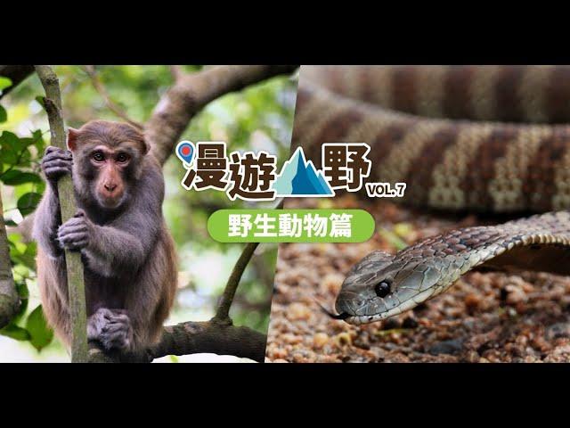 【漫遊山野】野生動物篇︰遇上動物必備招數──以退為進!