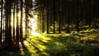 Franz Schubert - Impromptu No. 3 in G flat major Op. 90 (Edwin Fischer)
