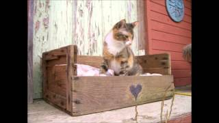 Creative,space Saver,money Saving Furniture For Cat/dog Owners (handmade) Part2