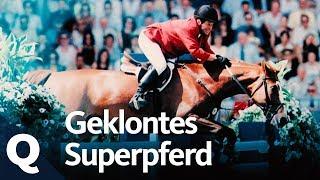 Pferdezucht 2.0: Das Klonen von Springpferden | Quarks