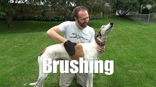 Brushing [3.07A]