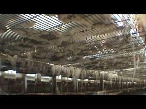 A Sample Rabbit Farming Business Plan Template