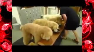 Приколы с Собаками    смотреть бесплатные видео приколы онлайн1