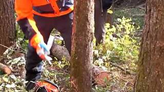 Repeat youtube video チェーンソーの使い方: 伐倒 tree felling with chainsaw