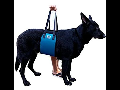 Diy make your own dog lift youtube diy make your own dog lift solutioingenieria Choice Image