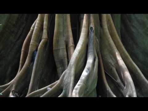 Breathe Magenta into Your Heart - Meditation